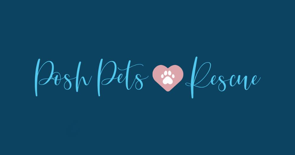 Home - Posh Pets Rescue